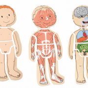 Lagenpuzzle Dein Körper Junge